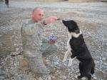 dog-feeding1